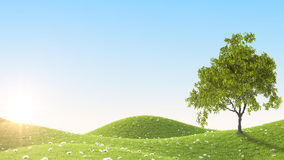 Green field. 3D rendering. Perfect summer green grass field. 3D rendering Royalty Free Stock Image