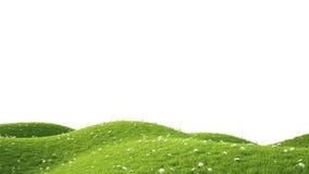Green field. 3D rendering. Perfect summer green grass field. 3D rendering Stock Photography