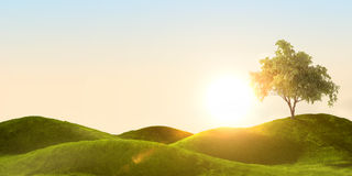 Green field. 3d rendering of a green field and tree Royalty Free Stock Photography
