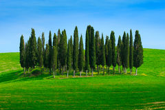 Green field with dark blue sky with white clouds and trees, Tuscany, Italy. Tuscany landscape in summer. Summer green meadow with Royalty Free Stock Photos