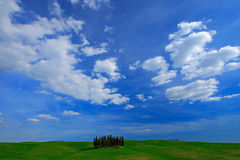Green field with dark blue sky with white clousds, Tuscany, Italy. Tuscany landscape in summer. Summer green meadow with tree grov Royalty Free Stock Photography