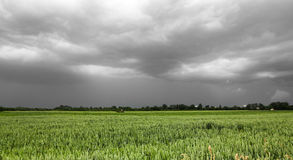 Green field and dark sky Stock Photography
