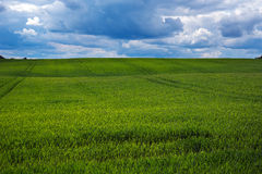 Green field and dark sky. Stock Photography