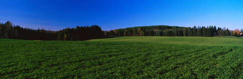 Green field on Darling Hill Road Royalty Free Stock Photo