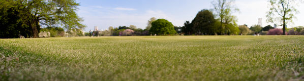 Green field (depth of field). Big green field of the park in the middle of Tokyo Stock Image