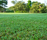 The green field with dew Royalty Free Stock Photo