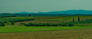 Green field and didstant mountains. A picture of green fields and distant blue mountains,in an area in Greece,Halkidiki,in a summer day afternoon Royalty Free Stock Images
