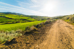 Green field and dirt road in Sardinia royalty free stock image