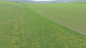 Green field . drone video. stock video