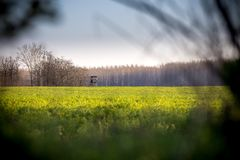 Green field on the edge of a hunting tower. Stock Image