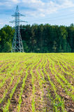 Green field, electricity line Stock Photo
