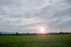 Green Field Evening At sunset royalty free stock photography