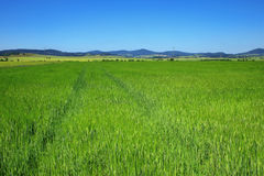 Green field. Excellent sky and green fields landscape Stock Images