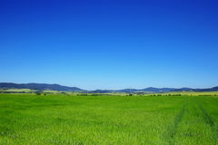 Green field. Excellent sky and green fields landscape Royalty Free Stock Photos