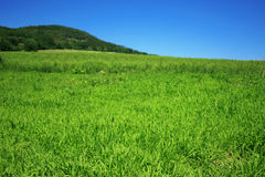 Green field. Excellent sky and green fields landscape Royalty Free Stock Images