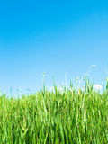Green field. Excellent sky and green fields landscape Stock Image