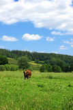 Green field. Excellent sky and green fields landscape Royalty Free Stock Photography