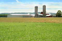 Green field and farm. Farm buildings with silos and barns on a sunny day, green field in front Stock Image