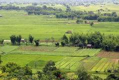 Green field with farm houses. Wide green field with farm houses, Shan State, Myanmar royalty free stock image