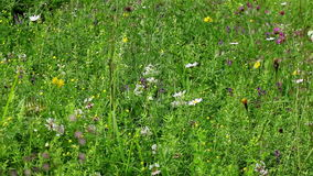 Green field flowers. Background view of various green field flowers and plants stock video footage