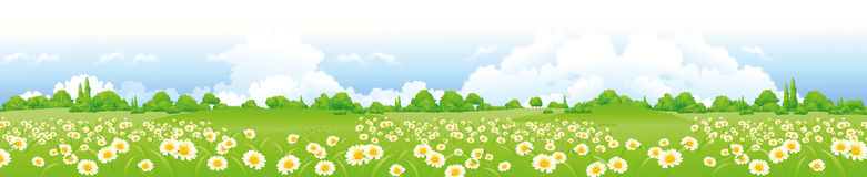 Green field with flowers. Landscape view of beautiful green field Royalty Free Stock Photo