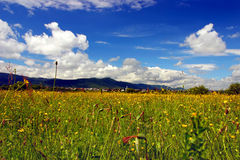 Green field with flowers in mountains. Green field with yellow flowers in mountain valley not far from a village under beautiful cloudy sky Royalty Free Stock Photography