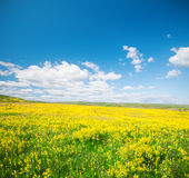 Green field with flowers under blue cloudy sky Stock Photography