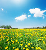 Green field with flowers under blue cloudy sky Royalty Free Stock Image