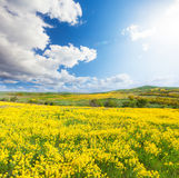 Green field with flowers under blue cloudy sky Royalty Free Stock Photos
