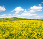 Green field with flowers under blue cloudy sky Stock Image