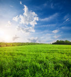 Green field with flowers under blue cloudy sky. This Green field with flowers under blue cloudy sky Royalty Free Stock Image
