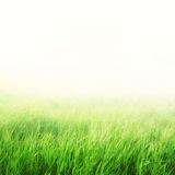 Green field with fog Royalty Free Stock Photos