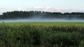 Green field and fog Stock Photography