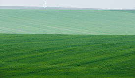 Green Field with foggy background Stock Photography