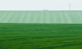 Green Field with foggy background Stock Photos