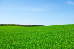 Green field,forest against the pure blue sky Stock Photos