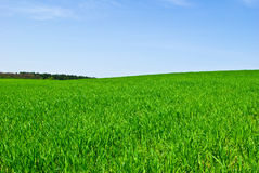 Green field,forest against the pure blue sky Royalty Free Stock Photo