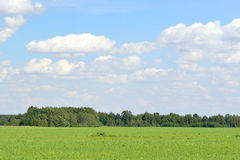 Green field, forest and blue sky Stock Photography