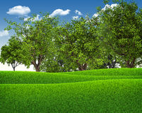 Green field, forest and blue sky Stock Photos