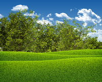 Green field, forest and blue sky Stock Images