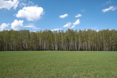 Green field, forest and blue sky with clouds in a horizontal line stock photo