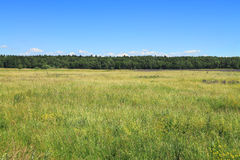 Green field with forest on the horizon, summer landscape. In the sunny day Royalty Free Stock Image