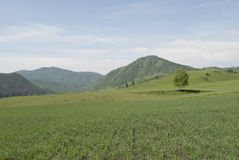 Green field, free space. Large green field, freedom, beauty, Russia, fields for agriculture Stock Photography