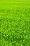Green Field. Stock Images