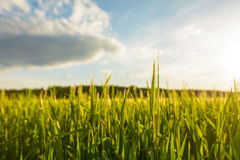 Green field with fresh grass. In foreground and clouds in the sky blurred in background, close-up low angle image Stock Photo