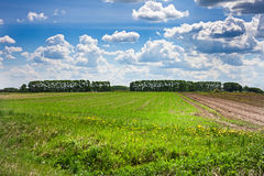 Green field with fresh grass. Perspective view. Royalty Free Stock Image