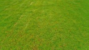 Green Field. Garden grass green field for relax Stock Image