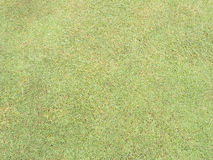Green field. Golf green field turf nature Royalty Free Stock Image