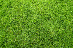 Green field of grass background Royalty Free Stock Photography