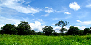 The green field of grass and the blue sky Royalty Free Stock Image